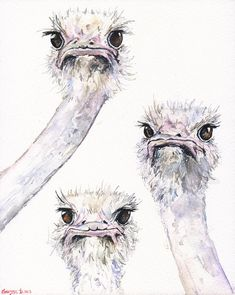Ostriches funny friends watercolor ORIGINAL Painting art beautiful ostrich gift home decor Africa wild room decal happy art friends birds