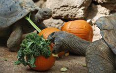 Animals around the world - Newsday
