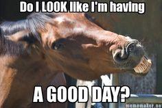 Via Horse Nation - Horses Funny - Funny Horse Meme - - Via Horse Nation The post Via Horse Nation appeared first on Gag Dad. Funny Horse Memes, Funny Horse Pictures, Funny Horses, Cute Horses, Funny Animal Memes, Pretty Horses, Horse Love, Cute Funny Animals, Funny Cute