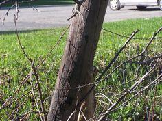 2015 clôture brisée