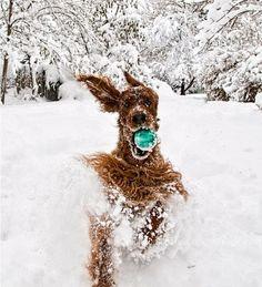 Dog fetching his ball...