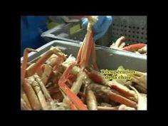 La pêche au crabe à Rimouski  www.tourisme-rimouski.org