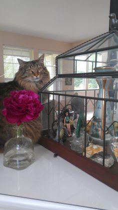 Sofee admires human treasures