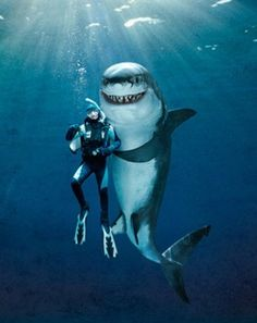 Discover the best destinations for diving or swimming with whale sharks. Our advice, information on diving with whale sharks. See also all dive sites, dive centers and destinations for diving with whale sharks and more. Shark Week, Funny Animals, Cute Animals, Shark Bait, Shark Swimming, Great White Shark, Ocean Creatures, Sea Monsters, Underwater Photography