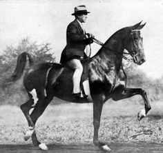Miss America (BHF) was sired by American Born and an excellent 3-gaited mare as well as a Hall of Fame Broodmare.