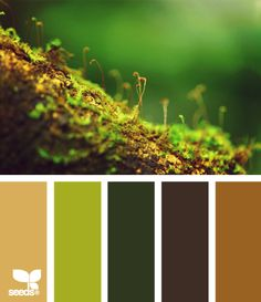 Greens and browns and gorgeousness
