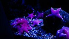 Genoa Aquarium Italy
