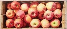 Life Paint, Still Life, Beautiful Flowers, Apple, Fruit, Painting, Rock, Tasty, Apple Fruit