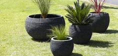 Our Beautiful Gentong Pots available from Water Features Direct Water Features, Planter Pots, Backyard, Celebs, Gardening, Magazine, House, Beautiful, Ideas