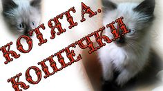 Котята  Кошечки