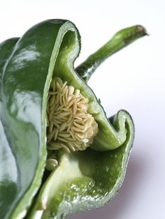 Harvesting Pepper Seeds: Information About Saving Seeds From Peppers