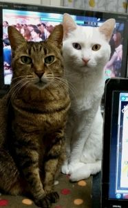 とら15歳バースデー - http://iyaiyahajimeru.jp/cat/archives/63661