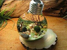 Mini ecosystem in a lightbulb, see this video also → https://www.facebook.com/Smartly2016/videos/637582989740690/