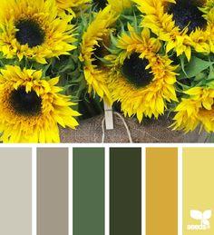 """""""La naturaleza es nuestra mejor fuente de inspiración para obtener una combinación de colores maravillosa.#ColoresDeLaNaturaleza """" By: Design Seeds"""