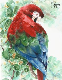 Original watercolor painting parrot macaw bright red green
