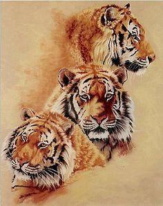 Tiger Painting - Nanook by Barbara Keith Tiger Drawing, Tiger Art, Tiger Painting, Tiger Head, Big Cats Art, Cat Art, Animal Paintings, Animal Drawings, Art Tigre