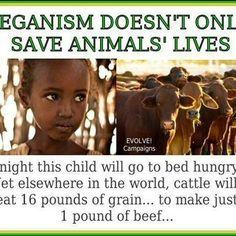 We have many reasons to stay as vegans. This is just one of them. It's a lifestyle. Go vegan. ★★★★ ☆☆☆ ★★ ☆ #VeganCommunity #GoVegan #vegetarian #animalrights #veganrules #veganhealth #veganpeople #crueltyfree #veganfun #bestofvegan #eartlings #bestveganrecipes #veganfoodshare #veganfoodlovers #plantbased #vegan #vegantips #veganmexico #veganmadrid #vegano #pet #yoga #vegantosavetheearth #VeganWarrior #veganpower #herbivore #animalabuse #veganitaly #vegannyc #VeganLifestyle