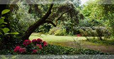 Jardín de La Saleta, en #Pontevedra, #Galicia. Uno de los jardines botánicos privados más importantes de España. Un pequeño paraíso escondido. Forma parte de la ruta de la #Camelia. La Saleta's Garden, one of the most important private botanic gardens in Spain. #Pontevedra, #Galicia. Member of the Camellia's Route.