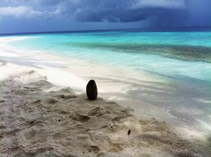 Malediven Delphine, Beach, Water, Outdoor, Rainy Season, Snorkeling, Maldives, Sunrise, Diving