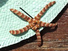 Fermacapelli a stella marina