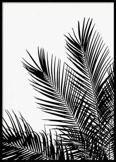 """Black Palm Tree One Poster - - Black palm poster """"A black and white poster depicting palm leaves. A detailed poster that goes nicely with our other black and white designs. Together with the """"""""Black Palm Tree Two"""""""" poster it makes a perfect pair! Black And White Posters, Black And White Aesthetic, Black And White Design, White Art, Photo Wall Collage, Picture Wall, Gold Poster, Groups Poster"""