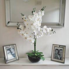 🌺DIY Orchid🌺 Saved a bunch sourcing it all myself 🤑 Hallway Decorating, Orchids, Diy Home Decor, Vase, Interior Design, Plants, Instagram, Nest Design, Home Interior Design