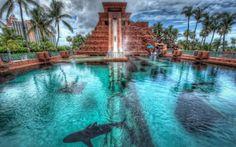 http://www.bebarang.com/exoticism-atlantis-hotel-bahamas/ Exoticism Atlantis Hotel Bahamas : Nassau Bahamas Atlantis Hotel Shark Atlantis Hotel Bahamas