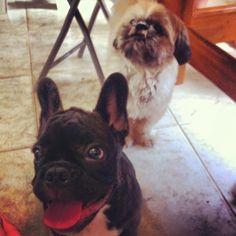 Dexter e o priminho Ludovico!!