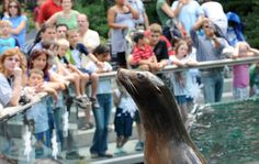 When in Central Park make sure to stop by the Zoo. It's great fun for people of all ages. Learn more about what New York City adventures await you with New York By Rail http://newyorkbyrail.com/New-York-City-Overview/                        Photo Source: Julie Larsen Maher ©WCS   #ILoveNY #NYC #CentralParkZoo #Seals