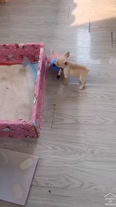 Cute Baby Dogs, Cute Funny Dogs, Cute Funny Animals, Cute Puppies, Cute Animal Videos, Cute Animal Pictures, Cute Little Animals, Cute Creatures, Pet Birds
