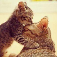 El amor de una madre.