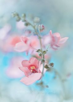 Cherry Blossoms by Ana Rosa #Spring #Beauty #Flowers ★ www.facebook.com/EssencetoSuccess