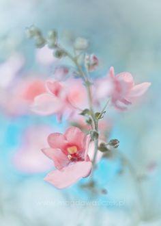 Cherry Blossoms by Ana Rosa #Spring #Beauty #Flowers ★ www.facebook.com/EssencetoSuccess