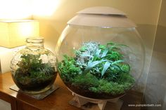An introduction to terrariums.