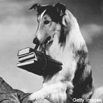 Lassie go find Timmy...is Timmy in the well? :-)
