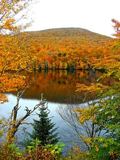 Autumn leaves in Cape Breton, Nova Scotia, Canada