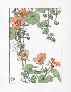 Jeannie Foord «Decorative Plant and Flower Studies: For the Use of Artists, Designers, Students and Others Art And Illustration, Botanical Illustration, Illustrations, Fleurs Art Nouveau, Art Nouveau Flowers, Art Nouveau Tattoo, Motif Art Deco, Art Nouveau Design, Botanical Drawings