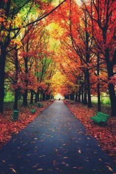mstrkrftz:  Autumn trees in park with colorful leaves by SergeyIT
