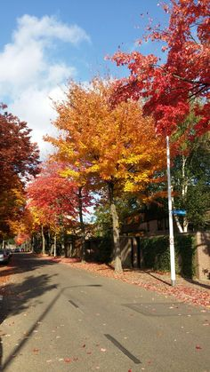 Autumn such inspiring season - 2016