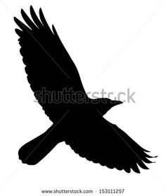 silhouette of the crow  or rook