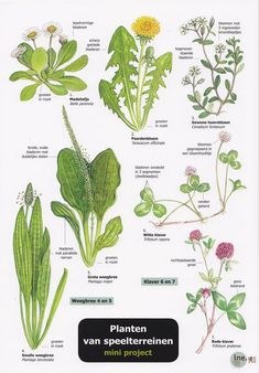 edible weeds found in new mexico English Flowers, Biology Teacher, Plant Identification, Outdoor Learning, Forest School, School Readiness, Edible Plants, Botanical Drawings, Autumn Activities