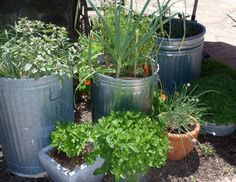 BBY 2012 - herbs close to the kitchen door in Sandy's garden Garden Crafts, Plant Sale, Backyard Garden, Little Gardens, Ornamental Plants, Garden Tours, Backyard Patio, Urban Garden, Garden Art