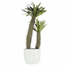 Foliage Cactus (Potted) 76cm | Freedom Furniture and Homewares