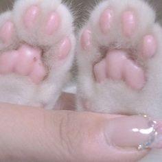 Sougi pretty paws