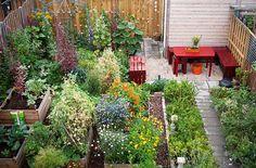 Gorgeous garden, raised beds