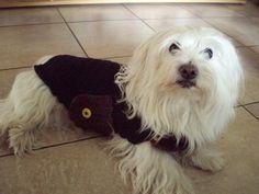 Dog Coat pattern by Katia (Notre-Atelier) Dog Sweater Pattern, Crochet Dog Sweater, Sweater Patterns, Malteser, Coat Patterns, Dog Dresses, Pet Clothes, Dog Clothing, Dog Coats