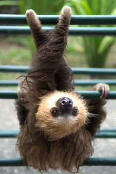 A lady always sits with her legs crossed. | 26 Invaluable Life Lessons According To Sloths
