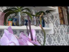 Размножение орхидей.Новая красавица.Витаминный спрей))) - YouTube