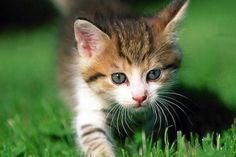 Absolutely Adorable Kitten Photos | Too Cute (20 Pics)