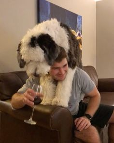 """7,182 Likes, 1,051 Comments - Otis The Sheepadoodle (@otis_unleashed) on Instagram: """"When you have complete control over your drinking habit #wineoclock """""""